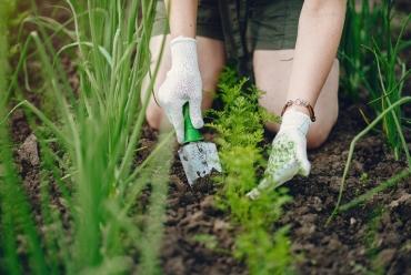 Mały ogródek warzywny dla początkujących