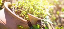 Recykling w ogrodzie? Czemu nie! Postaw na eko aranżację