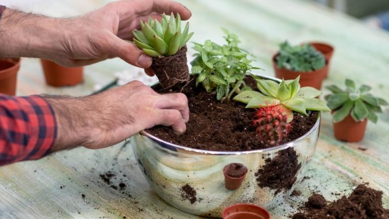 Las w słoiku DIY - odrobina zieleni w naczyniu!