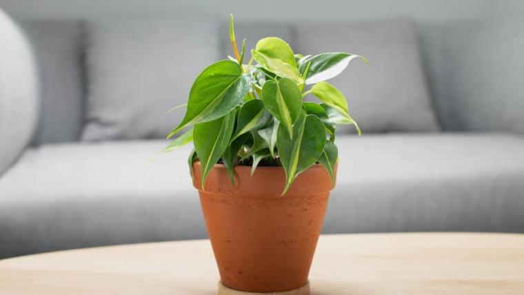 Rośliny oczyszczające powietrze - fakty i mity