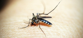 Jak pozbyć się komarów w trakcie garden party?