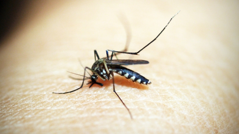 Sposoby na pozbycie się komarów