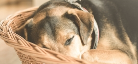 Jak wydzielić w domu miejsce dla psa?
